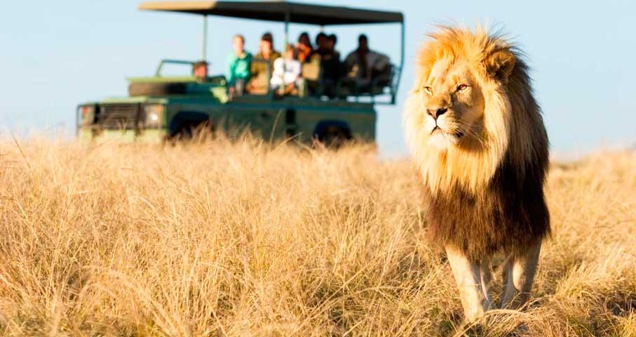 ЮАР.-Наедине-с-природой